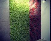 zid od mahovine Green World