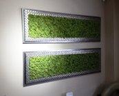 Green World moschito mahovina (3)