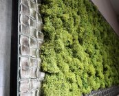 Green World moschito mahovina (7)