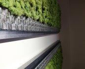 Green World moschito mahovina (8)