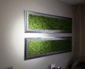 Green World moschito mahovina (2)